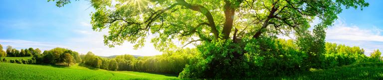 Nachhaltigkeit in Umwelt und Gesellschaft